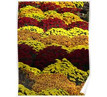 Colorful Flowers, Jersey City, New Jersey Poster