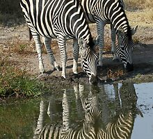 Double Stripes by jozi1