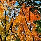 Treetops by John Novis