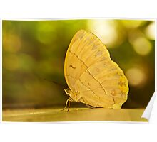 big butterfly Poster