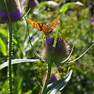 Butterfly and Thistle by exvista