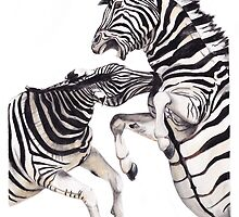Zebra Fight by Meaghan Roberts