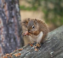Jasper Squirrel by Ron Finkel