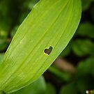 Leaf's Heart by Pam Hogg