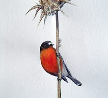 Flame Robin on a Thorny Perch by melhillswildart