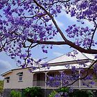 Under the Purple Canopy 2 - Boonah Qld Australia by Beth  Wode
