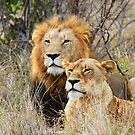 A Handsome Couple in the bush ! by jozi1