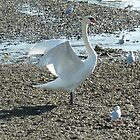 Swan Stretching by g369