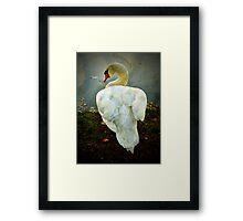 Secretive Swan Framed Print