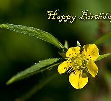 Birthday Buttercup by jkartlife