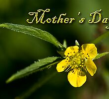 Mother's Day Buttercup by jkartlife
