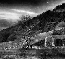 Aged Barn by Alan E Taylor