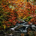 We All Have Our Time ~ Fall Colors ~ by Charles & Patricia   Harkins ~ Picture Oregon