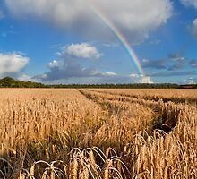Rainbow over wheat field by Olha Rohulya
