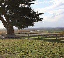 Windswept over Norfolk Plains Tas by suburbanjubilee