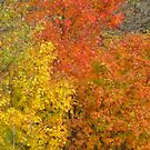 Yellow, Red & Orange by lorilee