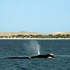 Whales at Fowler's Bay, South Australia. by elphonline