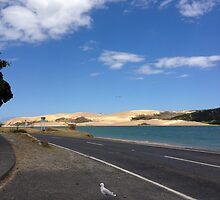 North Island NZ - Sand Dune by soulimages