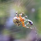Spider Vs Ladybug. by creepy1
