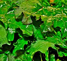 Kale for Dinner by Carolyn Clark