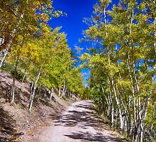 Back Country Road Take Me Home Colorado by Bo Insogna