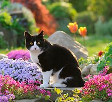 Garden Cat by Katho Menden