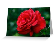 First Rose Of The Season Greeting Card