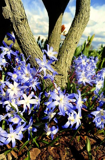 Pretty purple around a tree by Dani LaBerge