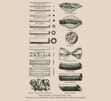 Retro cookbook pasta illustration by Jane McDougall
