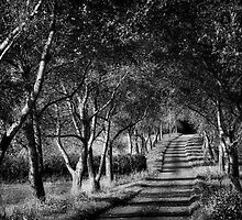 Path Of Trees And Shadows by Michael Carter