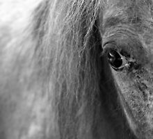 A Horse's Eye by Omar Dakhane