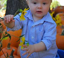 In the Pumpkin Patch  by Tracey Hampton