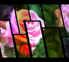 Pink Roses in Anzures 1 Tinted 1 by Christopher Johnson