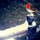 Robin in Snow by chelleill