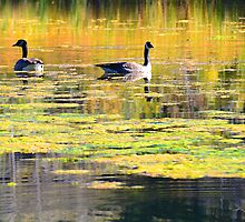 Autumn Geese  by Tracy Jones