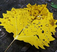 Freshly Fallen Leaf by SRowe Art