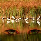 Eyes in the Marsh by imagetj