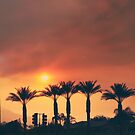 Palms on Fire by Laurie Search
