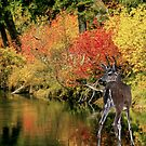 A Quiet Autumn Lagoon by Diane Schuster
