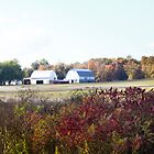 INDIANA BARNS by Pauline Evans