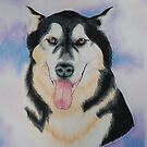 Malamute by Penny Edwardes