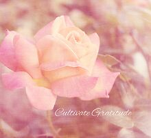 Cultivate Gratitude by afeimages