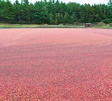 Cranberry Harvest by Poete100