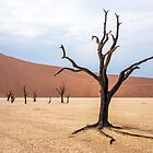 Dead Vlei I by Neville Jones