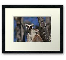 I'm A Ring Tailed Lemur Framed Print