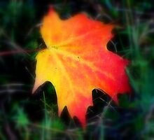 The Maple Leaf ! by Elfriede Fulda