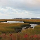Fall on the Marsh by debraroffo