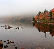 Acadia in the Fog by Karin Pinkham