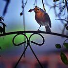 Robin by Tobias King