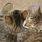 Sleepy Kittens by John Butler